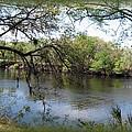 Suwannee River by Carla Parris