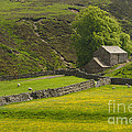 Swaledale by Louise Heusinkveld