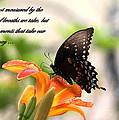 Swallowtail Card by Travis Truelove