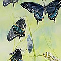 Swallowtail Story by Celene Terry