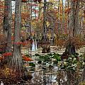 Swamp In Fall by Marty Koch