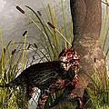 Swamp Lycaenops by Daniel Eskridge