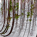Swamp Reflection by Kenneth Albin