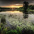 Swamp Sunrise by Everet Regal