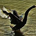 Swan Dance 2 by Blair Stuart