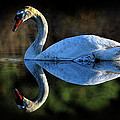 Swan by Dave Mills