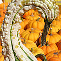 Swan Gourd by Susan Herber