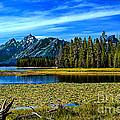 Swan Lake II by Robert Bales