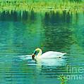 Swan Lake by Judi Bagwell