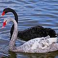 Swan Lake by Myrna Bradshaw