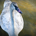 Swan On Evergreen Lake by Randall Nyhof
