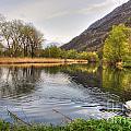 Swan Swimming On A Lake by Mats Silvan