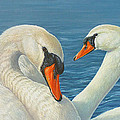 Swans In Love by Lisa Bonforte