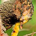 Swarm by Gene Hilton