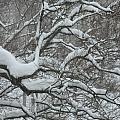 Swedish Winter by Kyra Munk Matustik