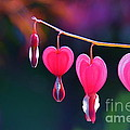 Sweet Hearts by Byron Varvarigos