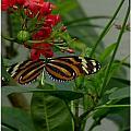 Sweet Nectar by Frank Wickham