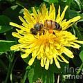 Sweet Nectar by The Kepharts
