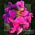 Sweet Pea Pop Out Photoart Square by Debbie Portwood