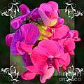 Sweet Pea Pop Out Square by Debbie Portwood