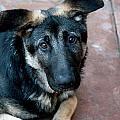 Sweet Spanish Pup by Lorraine Devon Wilke