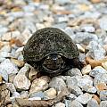Sweet Turtle Face by Sarah Wojcik