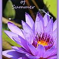 Sweetness Of Summer by Carol Groenen