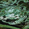 Swirling Algae by David Salter