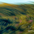 Swirling Field by Michael Canning