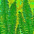 Sword Fern Fossil-green by Katherine Young-Beck