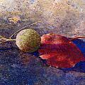 Sycamore Ball And Leaf by Andrew King