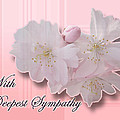 Sympathy - Cherry Blossoms by Mother Nature
