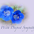 Sympathy Card - Blue Wildflower by Mother Nature