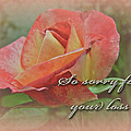 Sympathy Greeting Card - Peach Rose by Mother Nature