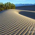 Symphony Of The Sand by Bob Christopher