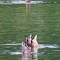 Synchronized Ducking by Chris Anderson