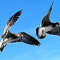 Synchronized Flying by Patricia Griffin Brett