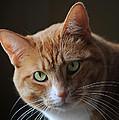 Tabby Cat by Elaine Mikkelstrup