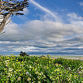 Table Bluff In Spring by Greg Nyquist