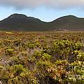 Table Mountain National Park by Fabrizio Troiani