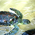 Tag Along Turtle by Stacey Robinson
