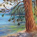 Tahoe Light Sugar Pine Point State Park by Karin  Leonard
