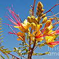 Tall And Bright by Bob and Nancy Kendrick