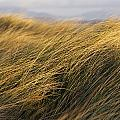 Tall Grass Blowing In The Wind by Peter McCabe