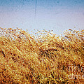 Tall Grass In The Wind by Silvia Ganora