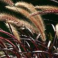 Tall Grass by Jim Nelson