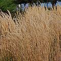 Tall Grass by Mark McReynolds