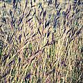 Tall Grass by Silvia Ganora