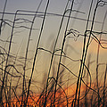 Tall Grasses Blowing In The Wind by Raymond Gehman