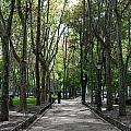 Tall Trees Of Madrid by Lorraine Devon Wilke